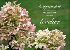 jasmine(0.0), lilac(0.0), blossom(0.0), shrub(0.0), branch(0.0), hydrangea(1.0), flower(1.0), plant(1.0), lilac(1.0), herb(1.0), flora(1.0),