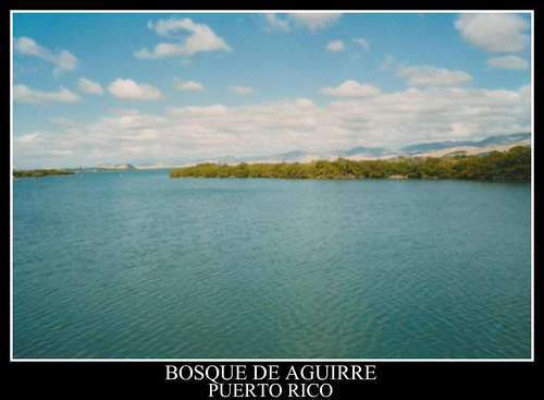 nature outdoors puertorico caribbean mangroves caribbeansea jobosbay bosquedeaguirre magroveswamp