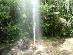 waterfall(0.0), trail(0.0), water feature(0.0), ravine(0.0), wasserfall(0.0), stream(1.0), rainforest(1.0), old-growth forest(1.0), body of water(1.0), watercourse(1.0), forest(1.0), state park(1.0), jungle(1.0),