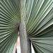 Small photo of Palm
