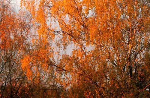sun nature finland осень kouvola природа vanagram