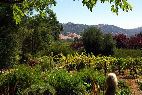 california ca usa alex garden de jack october mj russel jim hills valley daisy redwood alison adrienne 2010 ukiah grassi