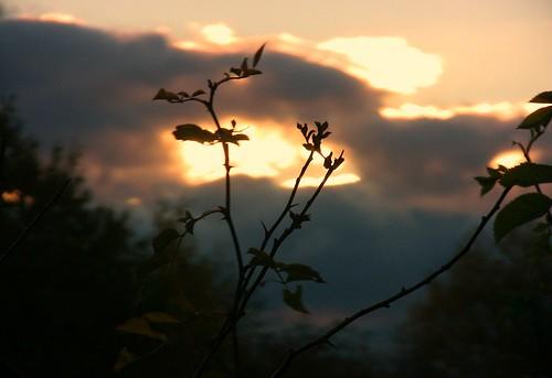 Zweig vor Abendhimmel  - 050/575