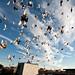 Willies Pigeons again: Bushwick Brooklyn by Chris Arnade
