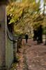    a garden is a lovesome thing    by Teresa Teixeira