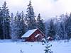 Snowy Slendor