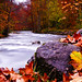 """Germany in Autumn"" Fall Color ~ River ~ Leaves ~ Orange ~ Image ~ Europe"