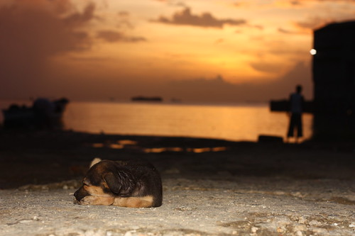 sunset dog nature docks bay trinidad 430exii 55250mm