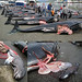 Faroe Islands Whale Slaughter - Does anybody care?