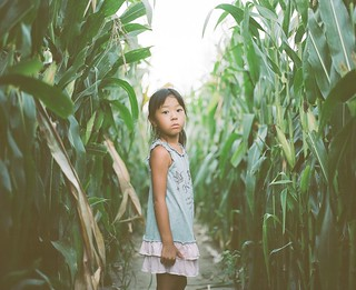 in corn field  #1