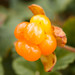 Cloudberry #3