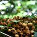 Fungi colony by Jinxed97™