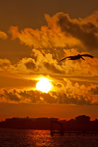 sun bird clouds sunrise pensacola