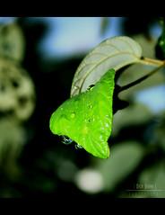 Green Zone Drops