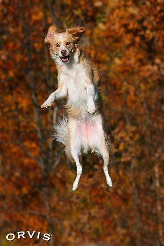 Orvis Cover Dog Contest - Kyra van Kos