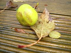 Apple and Dead Leaf on Wooden Decking