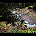 Bike & Strobo Session Kreuzbergl 2010-09-12_050 by tine_stone