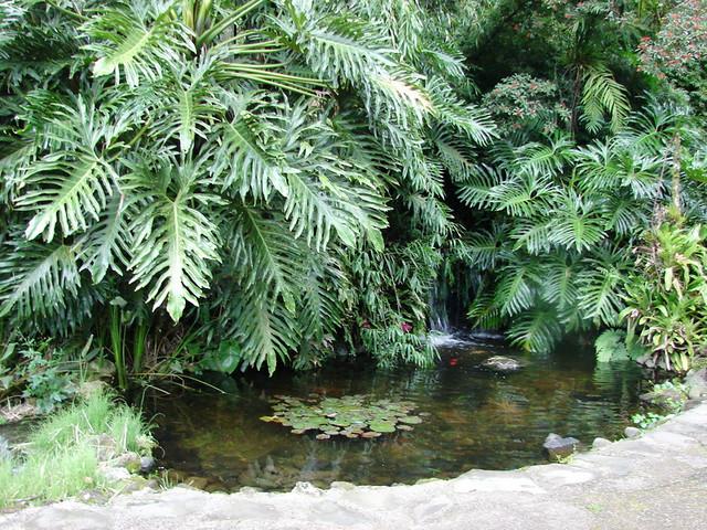 Jardin bot nico lankester costa rica explore jard n for Jardin lankester