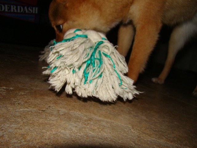 Rope Dog Toy Diyy