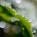 Raindrops by flimbe