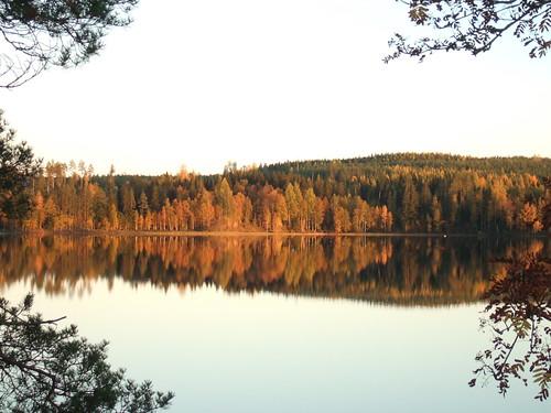 lake finland branch fallcolors autumncolours keuruu pohjoisjärvi