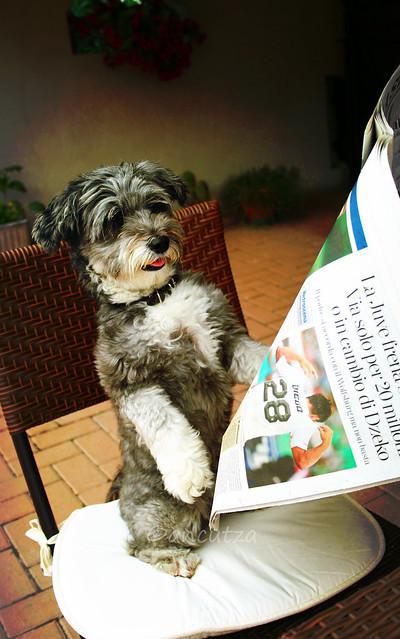 foto con cane simpatico leggendo il giornale