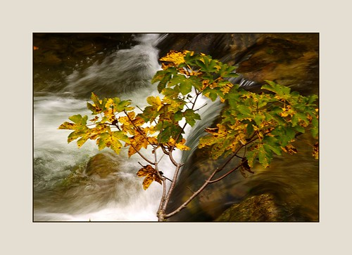 Bergbach im Herbst  (Mountain stream in autumn)