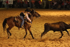 cattle-like mammal(0.0), tradition(0.0), reining(0.0), bullfighting(0.0), barrel racing(0.0), animal sports(1.0), rodeo(1.0), western riding(1.0), bull(1.0), event(1.0), equestrian sport(1.0), sports(1.0), charreada(1.0), performance(1.0),