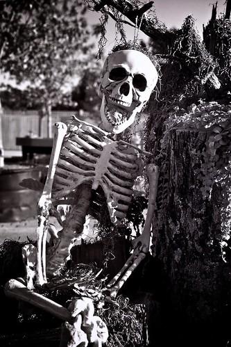 poverty blackandwhite bw halloween monochrome weird nikon teeth creepy spooky hanging skeletons tones healthinsurance d300 homesteadgardens gardencenters sb400 induro davidsonvillemaryland annearundelcountymaryland hangingbyarope 60micronikkor healthinsurancelegislation
