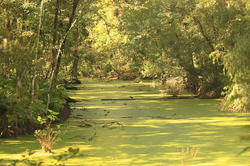green nature water forest weed louisiana atchafalaya atchafalayabasin bayou indianbayou