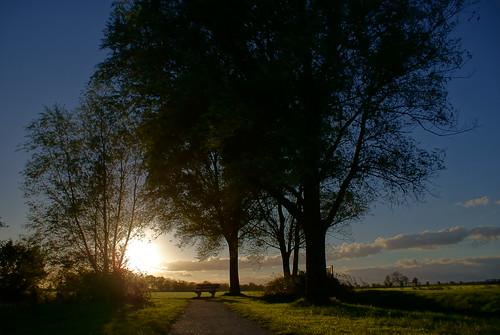 light sunset sky sun tree loft landscape evening licht zonsondergang sony nederland boom beam avond lucht sonne cpf zon leeuwarden westeinde sinne a300 fryslân liwwadden ljouwert ljocht sonyalpha α300 alpha300 sonyphotographing jûn sinneûndergong