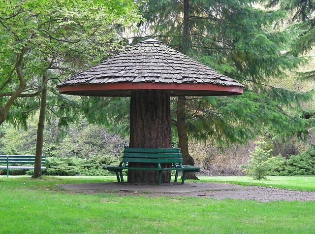 Tree Stump Bench Flickr Photo Sharing