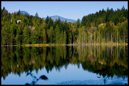 blue trees lake canada green nature water forest reflections bc britishcolumbia bowenisland conifers killarneylake zd 50mmmacro20 50mmmacrof20 olympuse3