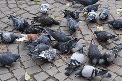 litter(0.0), waste(0.0), animal(1.0), pigeons and doves(1.0), bird(1.0),
