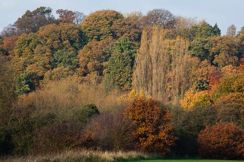Autumn: Tettenhall ridge