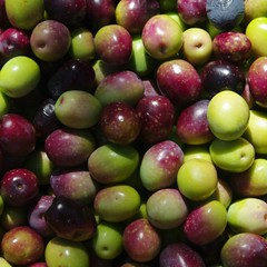berry(0.0), plant(0.0), damson(0.0), grape(0.0), produce(1.0), fruit(1.0), food(1.0), myrciaria dubia(1.0),