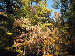 Autumn Colors Lake Crabtree NC 0448