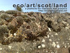 ecoartscotland card 1