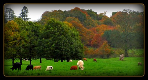 county ireland beautiful misty colours colourful nationaltrust incredible autumnal fermanagh florencecourt