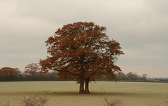 Otmoor tree