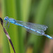 Damselfly by R22GMS