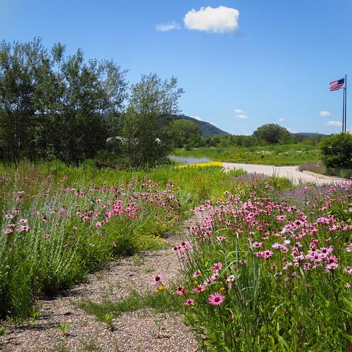 garden coneflower summer blooms landscape flowers nature outdoors winona minnesota gardenlandscape winonaminnesota