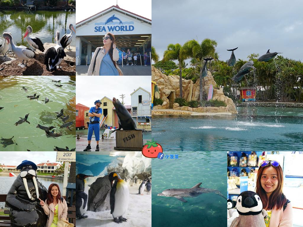 【黃金海岸】Sea World攻略海洋世界 看神仙企鵝游泳 海豚海狗表演