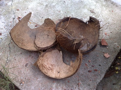 3: Coconut shells