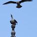 Gulls by Michael Keen