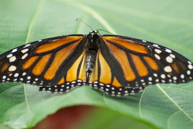 21 mooie kleurrijke vlinder - photo #24