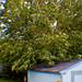 Small photo of Windy Back Yard