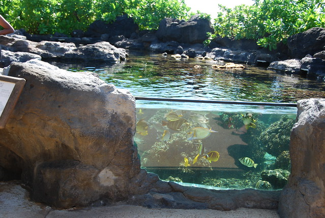 Outdoor fish tank waikiki aquarium by flynariel for How to build an outdoor aquarium