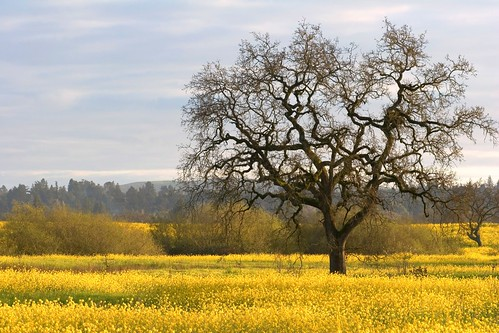 landscapes spring canon20d sonoma portfolio