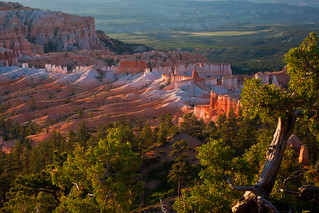 dawn - Bryce Canyon - 7-02-10  08